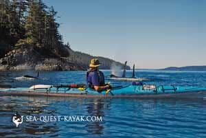 Orca Glides Past Kayak - San Juan Islands Kayaking Trip